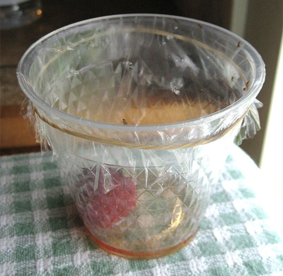 DIY Fruit Flies Trap