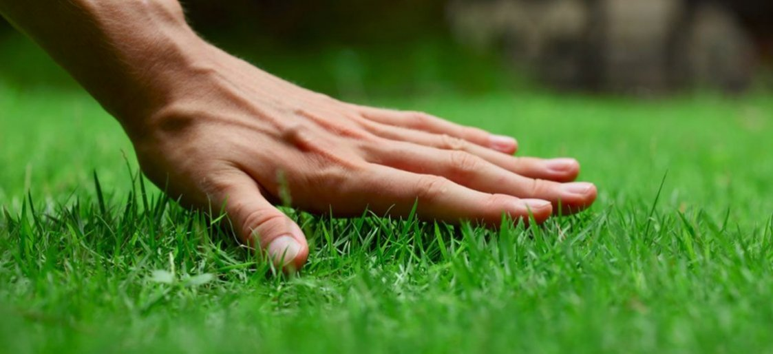 5 Tips For Achieving the Greenest Grass on the Block this Spring