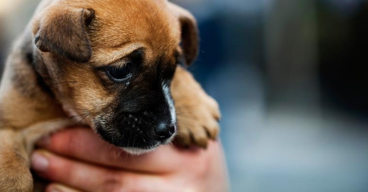 Puppy Scams: How to Protect Yourself from Fake Online Pet Sellers