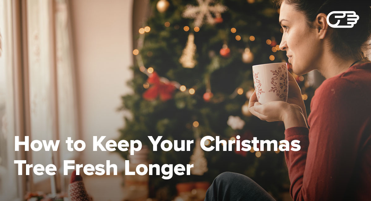 how to keep your christmas tree alive fresh green longer. Black Bedroom Furniture Sets. Home Design Ideas